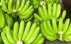 Giá chuối xanh bị đẩy lên trên 300.000 đồng/nải vẫn hút người mua
