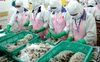 VASEP: Tăng trưởng xuất khẩu tôm sang Canada chưa ổn định