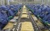 EU vẫn là thị trường tỷ USD của xuất khẩu tôm Việt Nam trong năm 2019