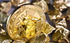 Giữa thời điểm hỗn loạn, chuyên gia chọn mua vàng hay Bitcoin?