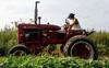 TQ đi nước cờ táo bạo chưa từng có: Mất khách hàng sộp, nông dân Mỹ đã