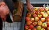 Chiến tranh thương mại leo thang nhưng người nông dân trồng táo Mỹ vẫn
