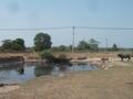 TP.HCM: Hồi sinh dự án công viên 500 triệu đô