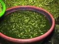 Ngâm rau muống bằng hóa chất bị phạt 39 triệu đồng