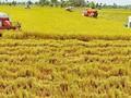 Đề nghị miễn giảm thuế sử dụng với 93.917 ha đất nông nghiệp
