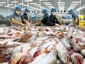 Cẩn trọng khi tăng xuất khẩu cá tra sang Trung Quốc