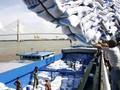 Trung Quốc phê chuẩn 8 đơn vị được phép khử trùng gạo xuất khẩu