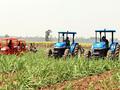 Khó vay ngân hàng, nông dân phải vay tín dụng đen để có vốn sản xuất