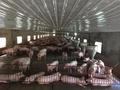 Chăn nuôi lợn vỡ trận vì tái cơ cấu nửa vời và yếu khâu thị trường
