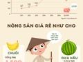 [Infographic] Nông sản đồng loạt kêu cứu nửa đầu năm 2017
