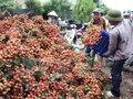 Bộ trưởng Bộ NN&PTNT: Vào vụ thu hoạch… cứ phải bán tống bán tháo