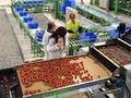 """Lấn cấn gói vay 100 ngàn tỷ cho nông nghiệp - Kỳ 2: Doanh nghiệp lo không dễ """"xơi"""""""
