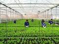 Sẽ tạo điều kiện thuận lợi cho DN dùng đất nông nghiệp làm tài sản đảm bảo vay vốn