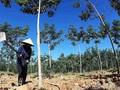 """Nhiều doanh nghiệp Việt bị lừa ở Lào, Campuchia vì tin """"cò"""" dự án"""