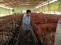 Bê bối thịt bẩn Brazil: Heo, gà ..Việt Nam hưởng lợi?