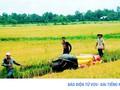 Phân bón tăng giá, đẩy giá thành sản xuất lúa lên cao