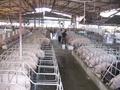 Dừng tạm nhập tái xuất sản phẩm thịt, phủ tạng từ bên ngoài qua Việt Nam?
