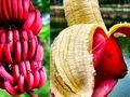 Những lợi ích sức khỏe khi ăn chuối đỏ