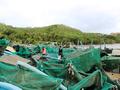 Nước mắt ở làng nghề nuôi trồng thủy sản sau bão dữ