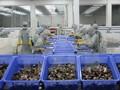 Xuất khẩu tôm khó đạt mục tiêu hơn 3 tỷ USD trong năm nay