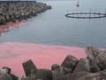 Dải nước đỏ xuất hiện tại Hà Tĩnh là hiện tượng tự nhiên bình thường