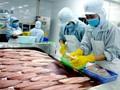 Xuất khẩu cá tra sang Trung Quốc tăng mạnh trở lại