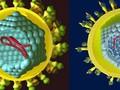 Chuyên gia hàng đầu bày cách phòng tránh ung thư gan - căn bệnh nguy hiểm khó phát hiện