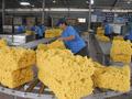 Xuất khẩu cao su sang Ấn Độ tăng mạnh