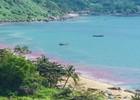 Vệt nước đỏ trên biển Đà Nẵng là trứng ruốc