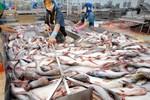 Vì sao cá tra Việt một mình một chợ vẫn khó bán hàng?
