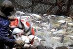 Công bố 802 sản phẩm thủy sản lưu hành trái phép