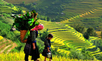 Quy hoạch Sapa trở thành trung tâm du lịch nghỉ dưỡng quốc tế
