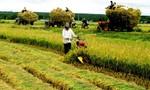 Phải trả tiền dịch vụ thủy lợi, nông dân bị ảnh hưởng gì?