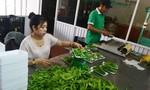 Gắn logo cho nông sản tránh nhầm lẫn hàng Trung Quốc