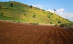Đề xuất đấu giá đất nông nghiệp chưa sử dụng