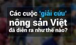 Các cuộc 'giải cứu' nông sản Việt đã diễn ra như thế nào?