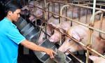 """""""Giải cứu"""" ngành chăn nuôi lợn: Đâu là giải pháp căn cơ?"""