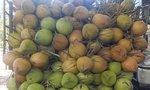 Giá dừa xiêm tăng mạnh trong mùa nắng