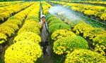 Giá hoa kiểng Tết hút hàng, giá tăng cao