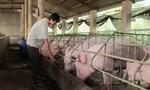 Tạo điều kiện tối đa cho xuất khẩu thịt lợn