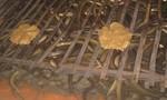 Thu tiền tỷ mỗi năm nhờ nuôi lươn không bùn theo tiêu chuẩn VietGAP