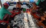 Vui buồn nghề nuôi 'vua' trên đảo Bình Hưng