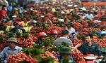 Ước tính bán 100.000 tấn vải thiều sang Thái Lan, Canada