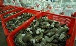 Xuất khẩu tôm sang khối EU tăng mạnh