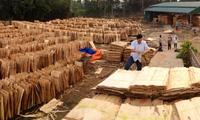 Nghi án doanh nghiệp xuất khẩu gỗ ván bóc sang Trung Quốc trốn thuế