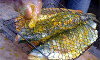 Cá Bỗng sông Gâm chục năm tuổi: Nhà giàu phải ăn dè