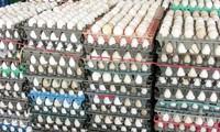 Trứng gia cầm tăng giá mạnh trước dịp Trung thu
