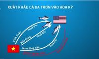 Cá da trơn xuất khẩu có nguy cơ mất thị trường Mỹ tiềm năng