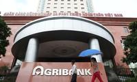 Hồ sơ vay sai, giám đốc Agribank vẫn chỉ đạo giải ngân