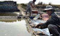 Giá rớt 1.000 đồng/kg, muối Sa Huỳnh vẫn vắng người mua